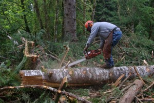 Chainsaw Use - Cookstove Community