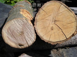 Green vs Seasoned Firewood - Cookstove Community