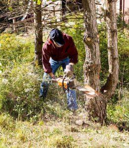 Chainsaw logging - Cookstove Community